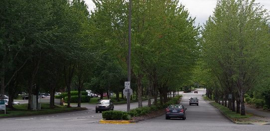 Urban trees are easy to count when they are in tidy rows next to streets.